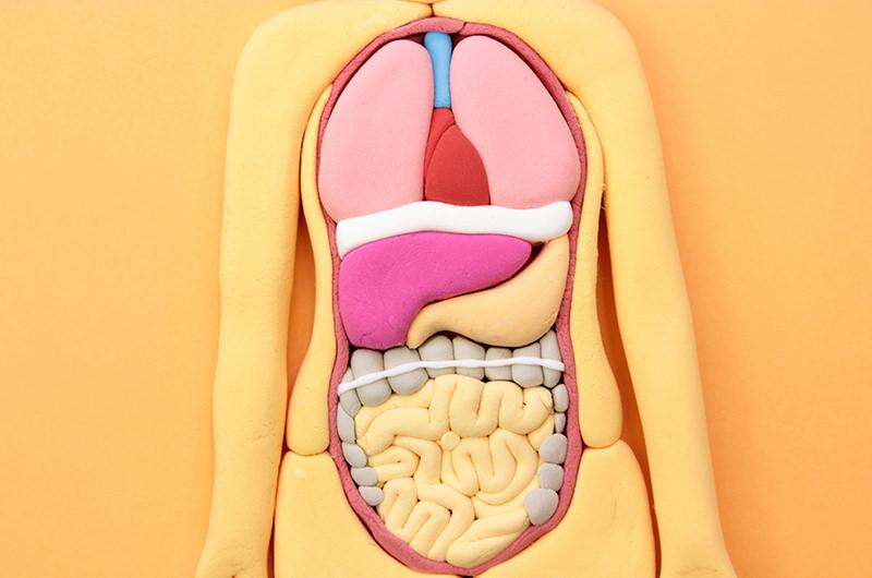 消化器内科で診る主な病気